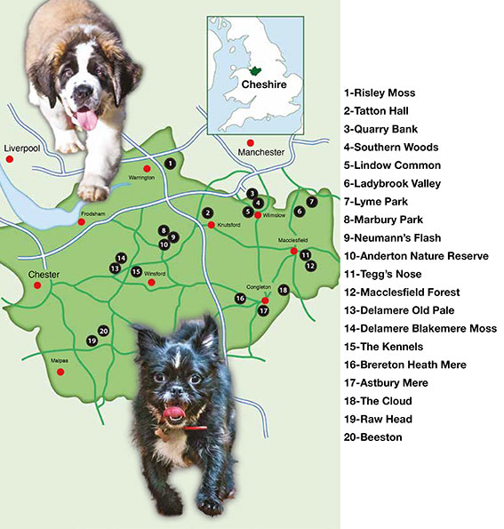 Best Dog Walks In Leicestershire