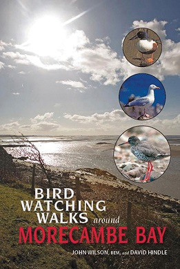 Birdwatching Walks around Morecambe Bay